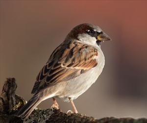 A New Jersey couple is facing court over their bird feeder.