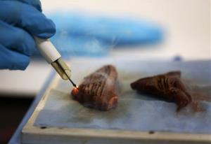 The experimental knife is used on a piece of animal muscle during a demonstration at St Mary's Hospital in London.