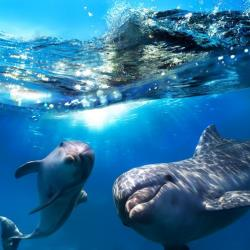 Dolphins appear to have names for each other, a study suggests.