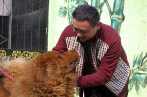 A Tibetan mastiff. Or, if you're the People's Park zoo, an African lion.