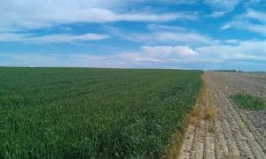 A picture of a Colorado field from the 51st State Initiative's Facebook page.
