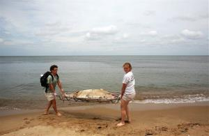 Virginia Aquarium workers carry a deceased male dolphin on a stretcher from Ocean View Beach in Norfolk on Aug. 1.