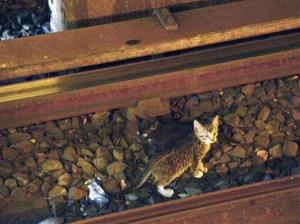 Two kittens stand between the rails on subway tracks in the Brooklyn borough of New York.