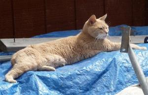 File photo of Stubbs lying on a tarp in an alley in Talkeetna, Alaska.
