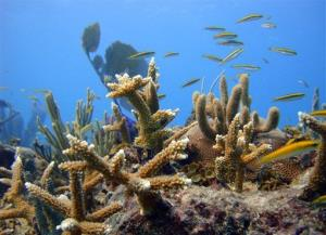 A healthy coral grows in Punta Cana, Dominican Republic, Oct. 18, 2011.