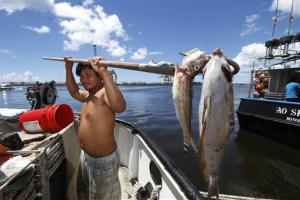 Placido Shim shows two fish he gaffed that were floating past his boat after a leaky pipe caused more than 1,400 tons of molasses to ooze into the harbor and kill marine life.