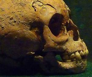 The skulls found in the historical city of Uxul were separated from the bodies.