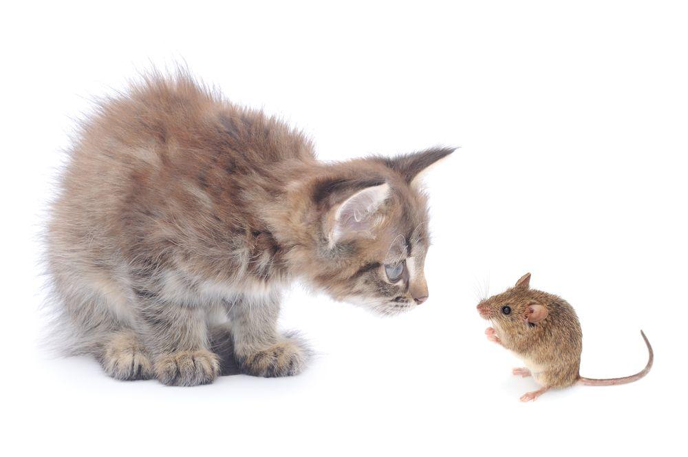 котята которые будут ловить мышей