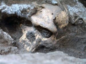 This 2005 photo shows a pre-human skull found in the ground at the medieval village Dmanisi, Georgia.