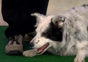 A screen grab from Chaser's visit to the 'Today' show.