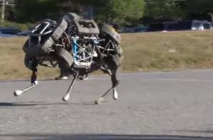 The WildCat robot from Boston Dynamics.