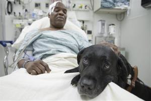 Cecil Williams pets his guide dog Orlando in his hospital bed following a fall onto subway tracks from the platform, Tuesday, Dec. 17, 2013, in New York.