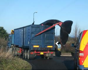 Not a sight you see every day: This photo from the Scottish Marine Animal Stranding Scheme shows the whale in transport.