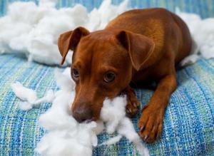No shame on display here, animal behaviorists say.