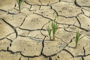 Droughts caused by climate change will hurt crop yields in the years ahead, the IPCC warns.