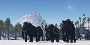 Woolly mammoths are stirring up controversy in South Carolina.