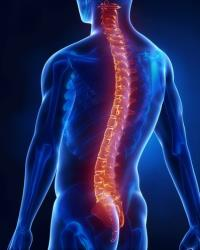 Electrical shocks may help restore mobility to paralyzed people.
