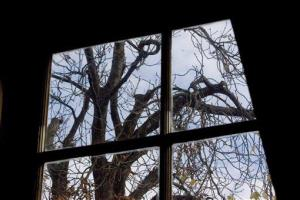 In this 2007 photo, the chestnut tree that comforted Anne Frank while she hid from the Nazis is seen from the Anne Frank House in Amsterdam.