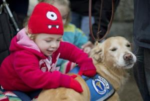 Addison Strychalsky, 2, of Newtown Conn., pets Libby, a golden retriever therapy dog, Dec. 18, 2012, in Newtown, Conn.