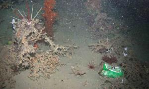 Our trash has beaten us to the ocean's deepest depths: study.