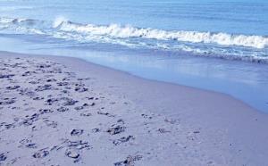File photo of a North Sea beach.