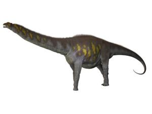 The new dinosaur might have looked something like this. It's a type of sauropod similar to Argentinosaurus, which is the one illustrated here.