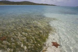Vieques island is shown here, though this is not a shot of Mosquito Bay.