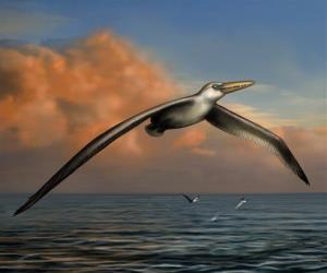 This undated image provided by the Bruce Museum shows a reconstruction image of the world's largest-ever flying bird, Pelagornis sandersi.