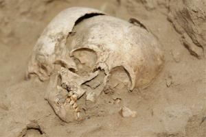 A skull of a child found in an archaeological dig.