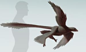 An artist's impression of the newly discovered raptor.