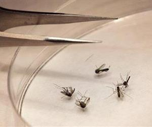 In this Aug. 16, 2012, file photo, mosquitos are sorted at the Dallas County mosquito lab in Dallas.