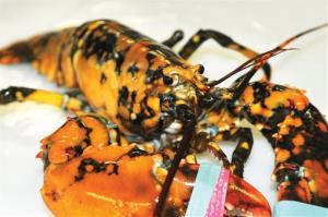 The calico lobster at the Explore the Ocean World Oceanarium in Hampton, N.H.