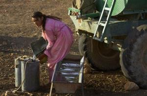 A Yazidi woman collects water for her sheep from a truck on Mount Sinjar, 250 miles, 404 kilometers, northwest of Baghdad, Iraq, Sept. 19, 2005.