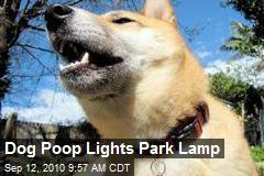 Dog Poop Lights Park Lamp