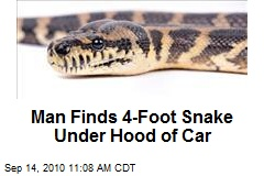 Man Finds 4-Foot Snake Under Hood of Car