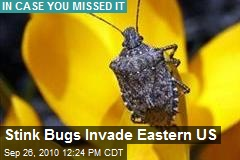 Stink Bugs Invade Eastern US