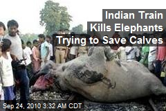Indian Train Kills Elephants Trying to Save Calves