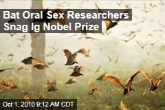Bat oral sex wins 2010 IgNobel Prize