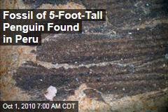 'Giant' Penguin Fossil Found in Peru