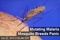 Mutating Malaria Mosquito Breeds Panic
