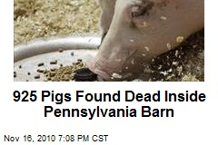 925 Pigs Found Dead Inside Pa. Barn