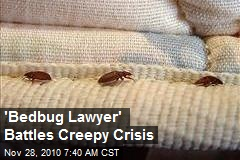 'Bedbug Lawyer' Battles Creepy Crisis