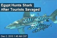 Egypt Hunts Shark After Tourists Savaged