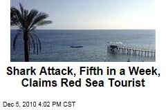 Shark Attack, Fifth in a Week, Claims Red Sea Tourist