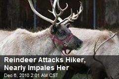 Reindeer Attacks Hiker