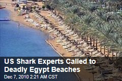 US Shark Experts Called to Deadly Egypt Beaches