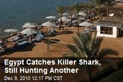 Egypt Catches Killer Shark, Still Hunting Another