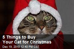 5 Things to Buy Your Cat for Christmas