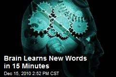 Brain Learns New Words in 15 Minutes