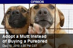 Adopt a Mutt Instead of Buying a Purebred